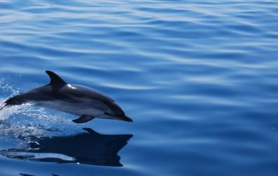 vacanze vela & relax in Liguria Cinque Terre